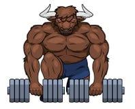 Muskulöser Stier hebt Dummköpfe an Stockfotografie
