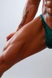 muskulöst ben Arkivfoton