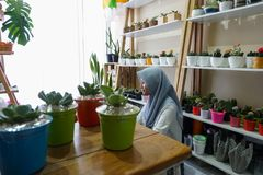 A Muslim businesswoman is selling succulent plants on internet. She has a clean and white workshop. There are succulent on simple royalty free stock photo