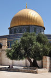 Muslim man on Temple Mount Stock Images