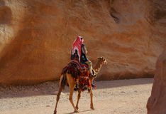 Muslim riding camel in canyon Stock Photos
