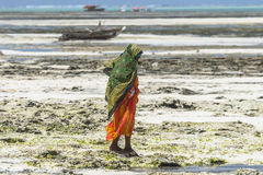 Muslim Woman on the beach. One WomAn with colorful clothes wolking at  Michanwi Pingwe Beach in Zanzibar , Tanzania . Africa Royalty Free Stock Photos