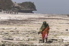 Muslim Woman on the beach. One WomAn with colorful clothes wolking at  Michanwi Pingwe Beach in Zanzibar , Tanzania . Africa Royalty Free Stock Photo