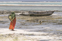 Muslim Woman on the beach. One WomAn with colorful clothes wolking at  Michanwi Pingwe Beach in Zanzibar , Tanzania . Africa Royalty Free Stock Image