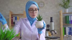 Muslim woman scientific botanist in a national scarf working in the laboratory conducting experiments on the plant stock video