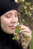 Muslim woman smelling cherry blossom royalty free stock photography
