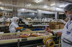 Muslim woman workers working in a chicken meat plant. Stock Photos