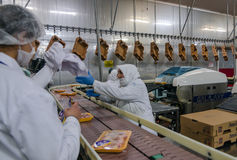 Muslim woman workers working in a chicken meat plant. Royalty Free Stock Photos
