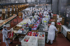 Muslim woman workers working in a chicken meat plant. Stock Photography