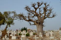 Muslimsk och kristen kyrkogård i Joal-Fadiouth, liten och nätt CÃ'te, Senegal arkivbilder