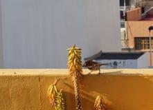 Musmannetje die in mijn terras eten royalty-vrije stock fotografie