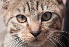 Muso del gatto Fotografie Stock
