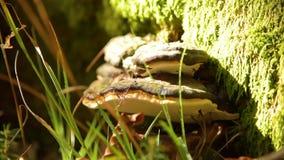 Musroom fungoso en corteza almacen de metraje de vídeo