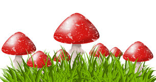 Free Musrooms In Grass Royalty Free Stock Images - 19714519