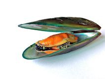 mussel Obraz Royalty Free