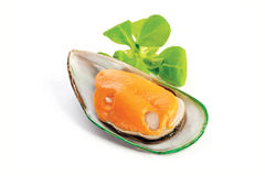 Mussel Stock Image