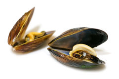 Mussel Royalty Free Stock Photography