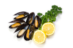 Mussel Royalty Free Stock Photos