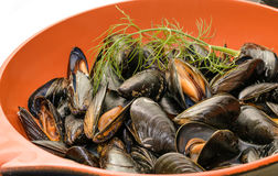 Mussel Obrazy Stock