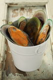 Mussel. Fresh mussel are in a white tube, with an ole wood background Royalty Free Stock Photos
