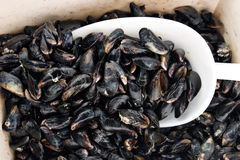 Mussel basket Royalty Free Stock Photography