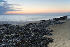 Mussel bed Stock Photo