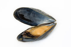 Mussel boiled Royalty Free Stock Photos
