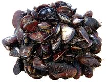 Mussels clams growing up in bunch isolated on white background royalty free stock images
