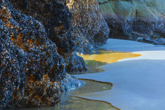 Mussel Encrusted Boulders Artfully Displayed. Mussel covered rocks artfully edged by water and sand, at low tide a Arcadia Beach just south of Cannon Beach on Stock Photos
