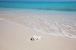 Mussel on an exotic beach Stock Photo