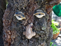 Mussel Face on Tree Stock Images