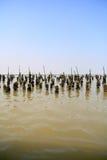 Mussel farm Royalty Free Stock Photos