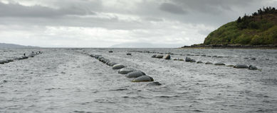 Mussel farm Stock Image