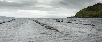 Mussel farm Stock Image