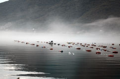 Mussel farm in early morning Stock Photo