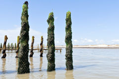 Mussel farm in the france sea Stock Photos