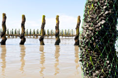 Mussel farm in the france sea Stock Image
