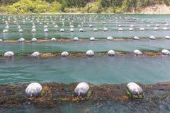 Mussel Farm Stock Photo