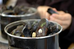 Mussel Feast. A feast of steamed mussels, served up in big pots in Brussels, Belgium stock photo