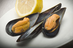 Mussel Royalty Free Stock Images