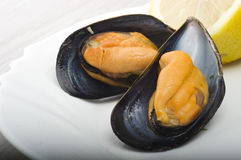 Mussel Stock Images
