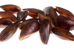 Mussel. Fresh mussel on a white background Royalty Free Stock Photos