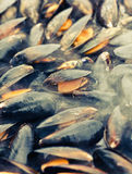 Mussel on the grill. Fresh opened mussel on the grill Royalty Free Stock Photo