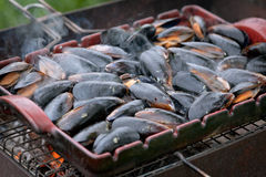 Mussel on the grill Stock Photos