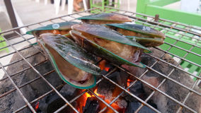 Mussel grill on stove Stock Photos