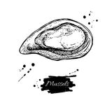 Mussel hand drawn vector illustration. Engraved style vintage seafood. Oyster sketch. Great for Fish and sea food restaurant menu, flyer, card, business Royalty Free Stock Photography