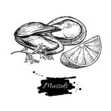 Mussel hand drawn vector illustration. Engraved style vintage seafood. Oyster sketch. Great for Fish and sea food restaurant menu, flyer, card, business Stock Photo