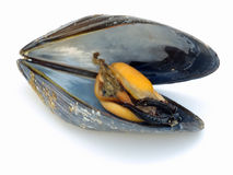 Mussel inside Stock Photo