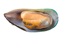 Mussel isolated Royalty Free Stock Images