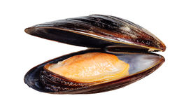 Mussel isolated on white Royalty Free Stock Photography